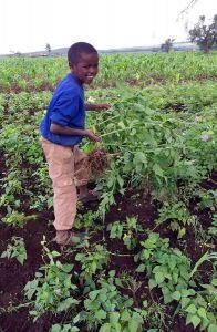 Kinder arbeiten am Feld mit